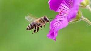 Bee-4