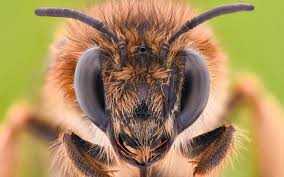 Bee-8