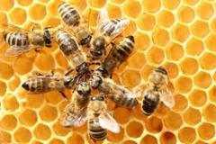 Bee-5