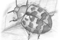 Ladybird-BW