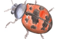 Ladybird-C
